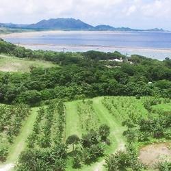 石垣島シーサー
